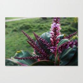 Tropical Purple Flower Canvas Print