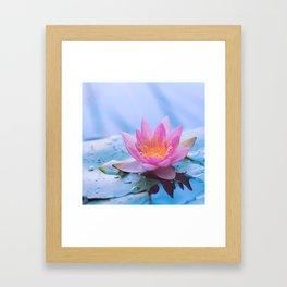 Lone Lotus Framed Art Print