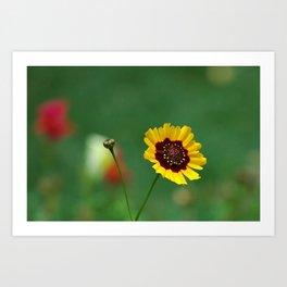 Coreopsis Flower Art Print