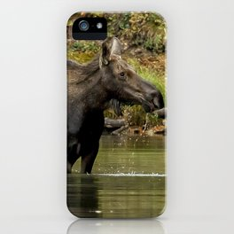 Female Moose at Fishercap Lake No. 1 iPhone Case