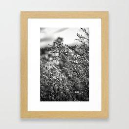 Stalks Framed Art Print