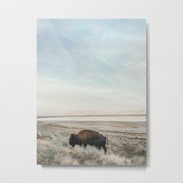 Bison of Antelope ISland Metal Print