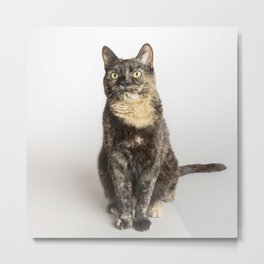 Dagny the cat Metal Print
