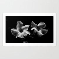 Sad flowers Art Print