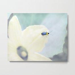 Little Ladybug on Wild Squash Plant by Murray Bolesta! Metal Print