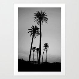 silver palms Art Print