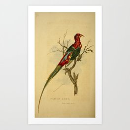 Vintage Print - Arcana or The Museum of Natural History (1811) - Papuan Lory Art Print