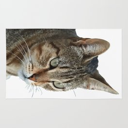 Stunning Tabby Cat Close Up Portrait Isolated Rug