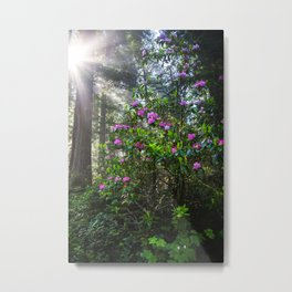 Wild Rhodies Metal Print