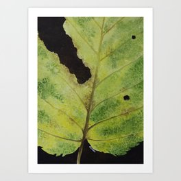 White Mulberry Leaf Art Print