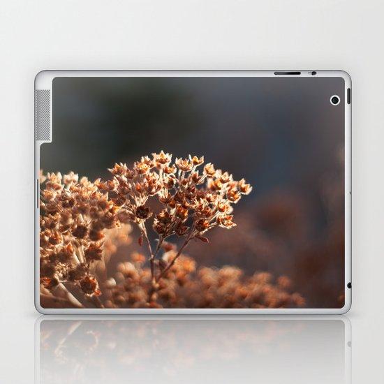 Morning's Light Laptop & iPad Skin