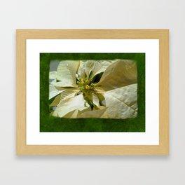 Pale Yellow Poinsettia 1 Blank P1F0 Framed Art Print