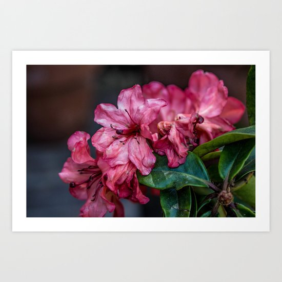 A Whole Bunch of Pink Art Print