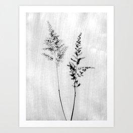 Delicate Black and White Botanical Photograph Art Print