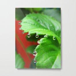 Strawberry Drops 0764 Metal Print