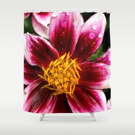 Wet pink flower 1 Shower Curtain