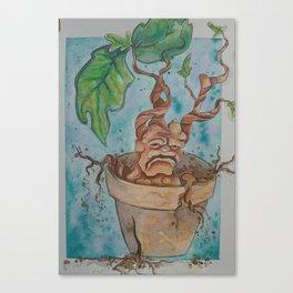Mandrake Canvas Print