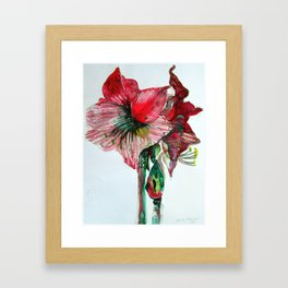 Cana Lily Framed Art Print