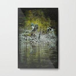 Herons 2 Metal Print