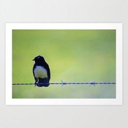 Bird @ Happy Hooves Animal Sanctuary Australia Art Print