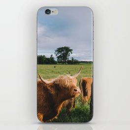 Highland Cows III iPhone Skin