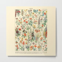 Wildflower Diagram // Fleurs II by Adolphe Millot 19th Century Science Textbook Artwork Metal Print