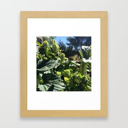 Beer Hops  Framed Art Print