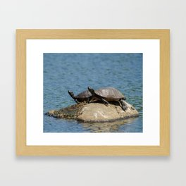 Sunshine Rock with Turtles Animal / Wildlife Photograph Framed Art Print