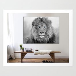 African Lion, black and white lion print, Canvas Print. Lion wall art, black and white wall art. Art Print