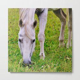 White horse on green meadow Metal Print