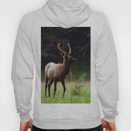 Deer Forest Hoody