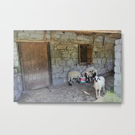 Being Watched by the Lamb Metal Print