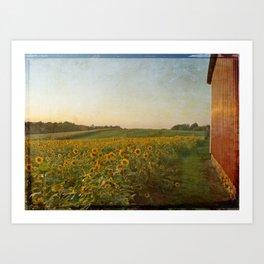 Sunflower & Barn At Sunset Art Print