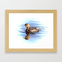 Pie-billed grebe Framed Art Print