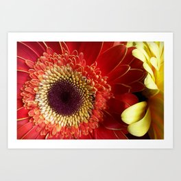 Colors of Gerberas Art Print