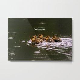 Ducklings in a Drizzle Metal Print