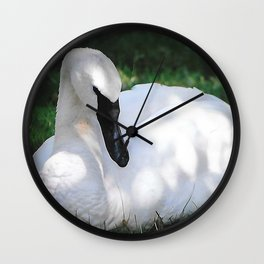 Trumpeter Swan at Rest Wall Clock