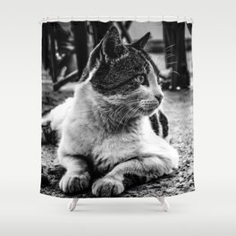 Istanbul Cats Shower Curtain