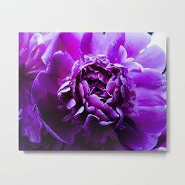 Purple flower 5 Metal Print