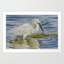 Snowy Egret And A Shrimp Art Print