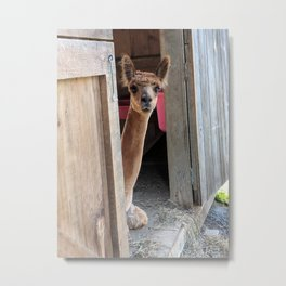 Why Hello! Metal Print