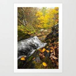 Cascade and Tree.  Doyle's River, Shenandoah National Park. Art Print
