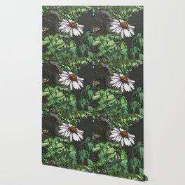 Echinacea DPPA151003-14 Wallpaper