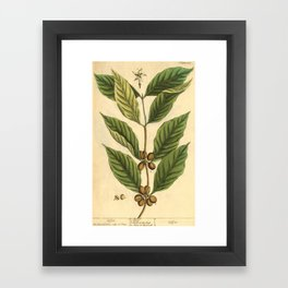 """Coffee by Elizabeth Blackwell from """"A Curious Herbal,"""" 1737 (benefiting The Nature Conservancy) Framed Art Print"""