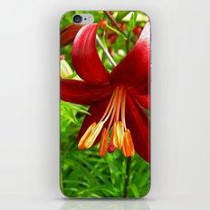 red lily iPhone & iPod Skin
