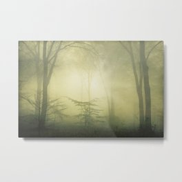 forest awakening - foggy forest scenery Metal Print