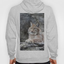 Young lynx portrait Hoody