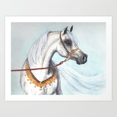 Egyptian Arabian stallion Art Print