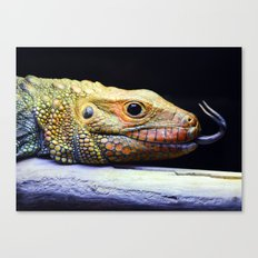 Caiman Lizard Profile Canvas Print