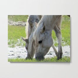 Chincoteague Pony Mare and Foal Metal Print